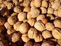 nuts-1518628